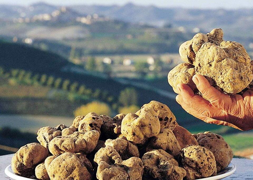 Preços de trufas caem na Itália