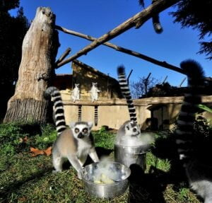 Zoo de Roma