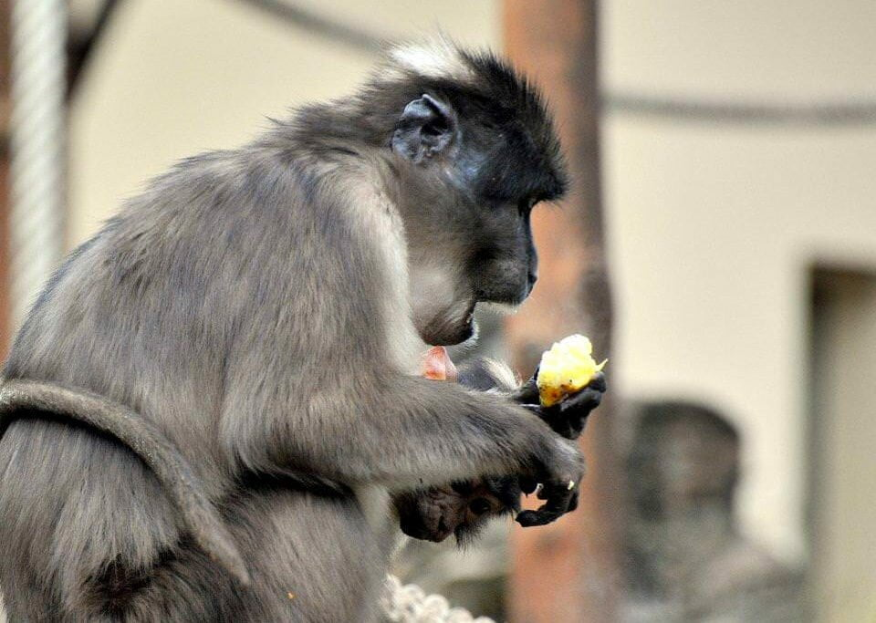 Zoo de Roma dá arroz e leite quente para animais suportarem onda de frio.