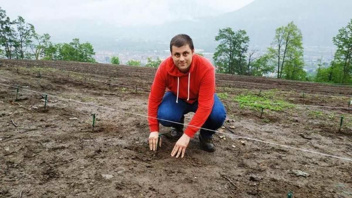 A aposta de um jovem: o novo vinhedo no Piemonte 'terá a uva da esperança'