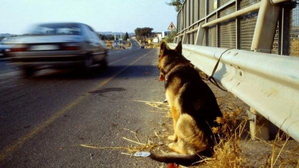 Abandono de animais na Itália