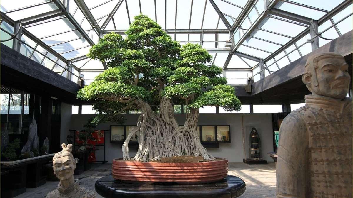 Itália tem o bonsai mais antigo do mundo