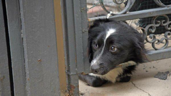 Cão espera dono internado covid