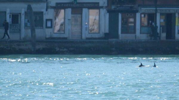 golfinhos veneza