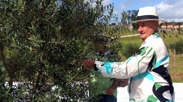 azeite de oliva rio grande do sul